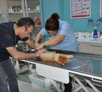 vetcorner-veteriner-klinigi-193