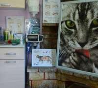 kumburgaz-veteriner-klinigi-891