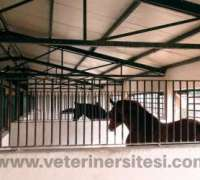at-istanbul-veteriner-klinigi-622