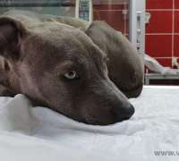 halic-veteriner-klinigi-531