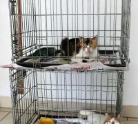 all-animal-veteriner-klinigi-154