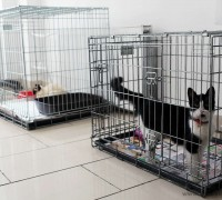 all-animal-veteriner-klinigi-397