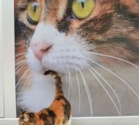 all-animal-veteriner-klinigi-95