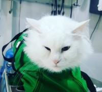 baris-veteriner-klinigi-314