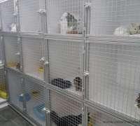 cadde-veteriner-klinigi-268