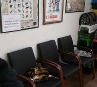 gizli-bahce-veteriner-klinigi-405