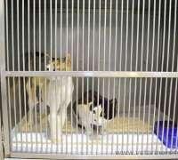 avrupa-veteriner-klinigi-97
