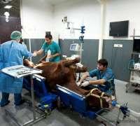 erdil-veteriner-at-poliklinigi-688