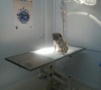 bagarasi-veteriner-klinigi-447