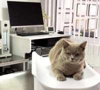 aksoy-veteriner-klinigi-302