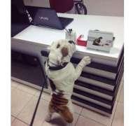 aksoy-veteriner-klinigi-659