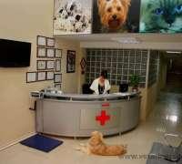 karsiyaka-veteriner-klinigi-655
