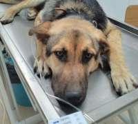 domestic-veteriner-klinigi-228