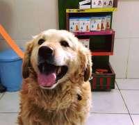 domestic-veteriner-klinigi-468