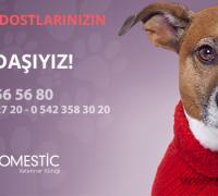 domestic-veteriner-klinigi-71