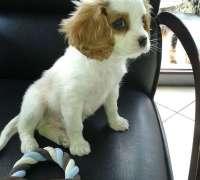 terapi-veteriner-klinigi-978