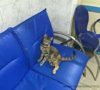 bulvar-veteriner-klinigi-979