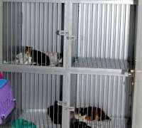 petopya-veteriner-klinigi-681
