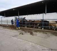 kocak-veteriner-klinigi-615