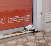 ugur-veteriner-klinigi-587