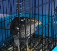 banucan-veteriner-klinigi-744