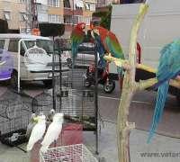 amazon-pet-shop-177