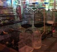 amazon-pet-shop-353