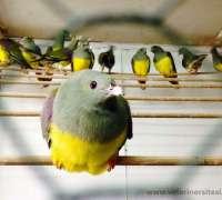 amazon-pet-shop-355