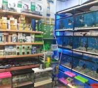 amazon-pet-shop-888