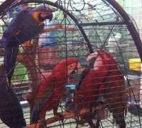 amazon-pet-shop-895