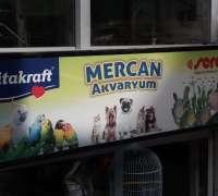 mercan-akvaryum-831