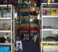 kemeralti-pet-shop-289