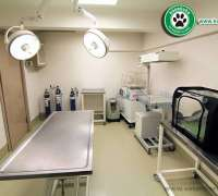 kokekuba-veteriner-poliklinigi-11