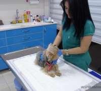 koala-veteriner-klinigi-241