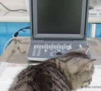 koala-veteriner-klinigi-33