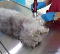 koala-veteriner-klinigi-380