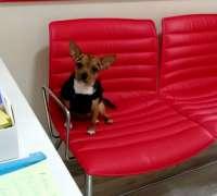 petkey-veteriner-klinigi-26
