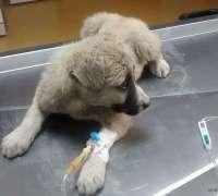hayat-veteriner-klinigi-443