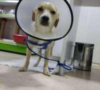 hayat-veteriner-klinigi-49