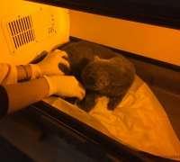 yenitepe-veteriner-klinigi-49