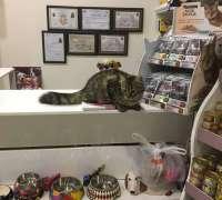 yenitepe-veteriner-klinigi-522