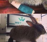wetnose-veteriner-klinigi-407