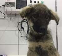 wetnose-veteriner-klinigi-735