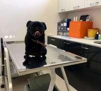 egzo-pet-veteriner-klinigi-285