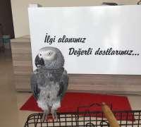 egzo-pet-veteriner-klinigi-369