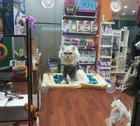 vetpozitif-veteriner-klinigi-486