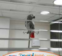 central-animal-veteriner-klinigi-550