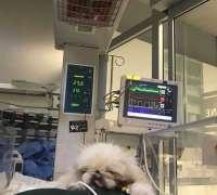 petcode-hayvan-hastanesi-48