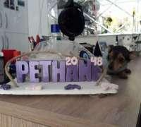 pethane-20-48-veteriner-klinigi-685