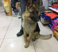 yasam-veteriner-klinigi-574